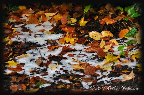 Autumn leaves and ice (hail)