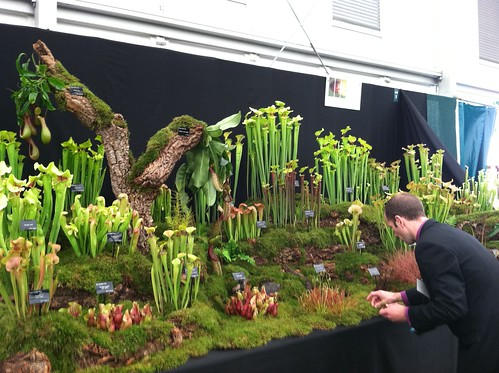 Preparing Carnivorous Plant Display