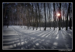 shadow theatre (Mariusz Petelicki) Tags: trees winter shadow snow forest zima hdr śnieg canonefs1022mm 3xp canon400d mariuszpetelicki vosplusbellesphotos