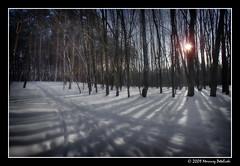 shadow theatre (Mariusz Petelicki) Tags: trees winter shadow snow forest zima hdr nieg canonefs1022mm 3xp canon400d mariuszpetelicki vosplusbellesphotos
