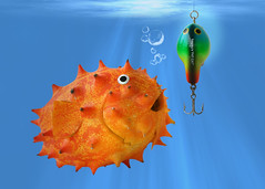 Blowfruit (RR) Tags: china blue food playing silly art fruit photoshop kino with humor fruta explore p puffer job wondering frontpage bait blowfish baiacu anthropomorphic playingwithfood kiwano isca anthropomorph explored antropomrfico verymessy partofthe antropomorfico anthropomorphe pezbola carvinga incaseyoure ttraodontid blasfisch kiwanoisa spreadhumorcoalition brincandocomacomidablog