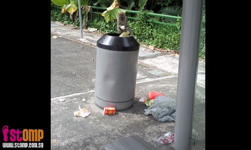 Hungry monkey scours rubbish bin for food