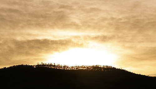 Sunrise Through Forest