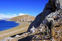 Horse View (reurinkjan) Tags: nature tibet 2008 changtang namtsochukmo anawesomeshot tibetanlandscape tengrinor janreurink damshungcounty damgzung tashidorgompa བོད། བོད་ལྗོངས། བཀྲ་ཤིས་བདེ་ལེགས། བྱང་ཐང།