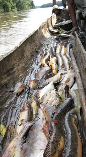 Lomami fisherman's pirogue