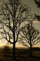 DSC_0011 (Jennifer Shindley) Tags: trees sunset mountains west silhouette oregon landscape dusk