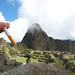 Smoking Inca