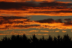 sunset (Saxon9) Tags: trees sunset sky orange black silhouette pine clouds australia pfogold pfosilver