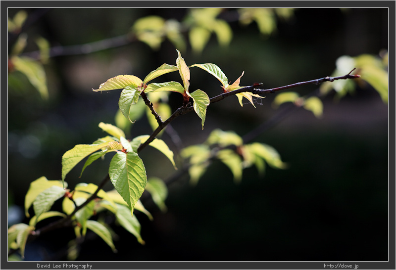 IMAGE: http://farm4.static.flickr.com/3368/3335110342_7f4c6a4b76_o.jpg
