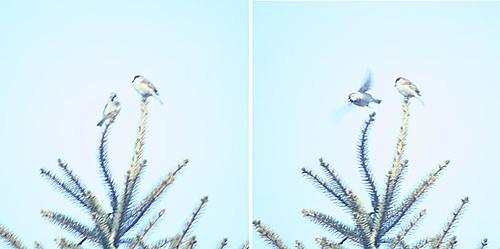 2 bird diptych