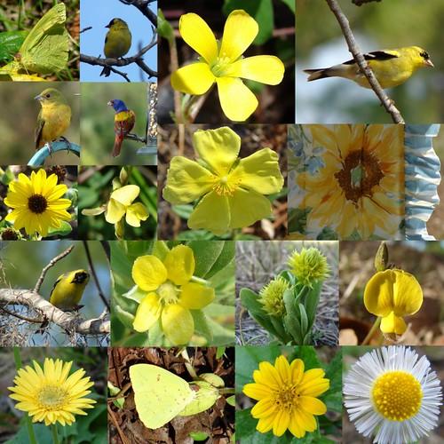 Photo Hunt - Yellow