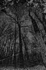 _MG_4626-16 (k.a. gilbert) Tags: trees sky bw reflection water leaves pond woods branches hike nophotoshop nocrop 116 lightroom uwa singleshot bestofbw tokina1116mmf28