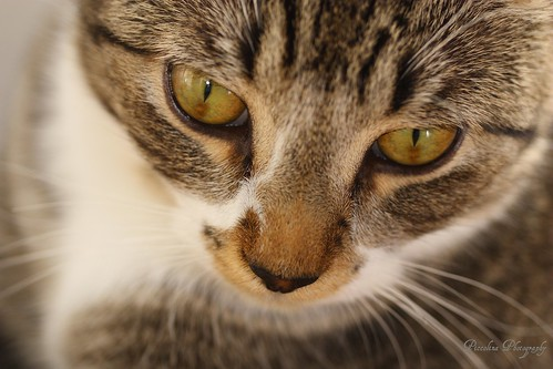 cat insurance ontario