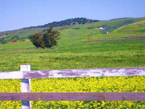Landscape - Primavera