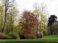 In the park of Meiningen (:Linda:) Tags: park tree germany town thuringia baum englishgarden frhling beechtree buche meiningen frhjahr fagussylvaticafpurpurea treesinspring picturewithmusic bumeimfrhling baumimfrhling