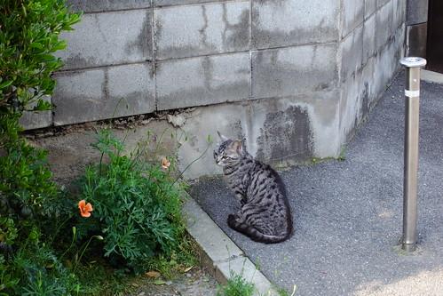 Today's Cat@20090501