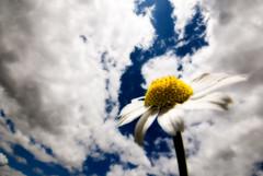 Mtodo Orton (javi_indy) Tags: explore cielo nubes margarita orton efectoorton mtodoorton tcnicasblog