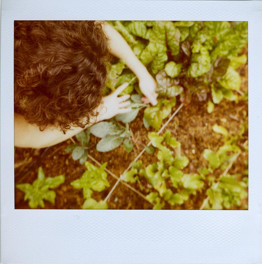 fpea & her lettuce