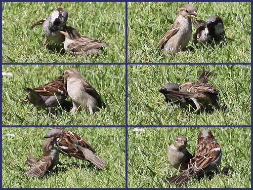 Sparrow Argument