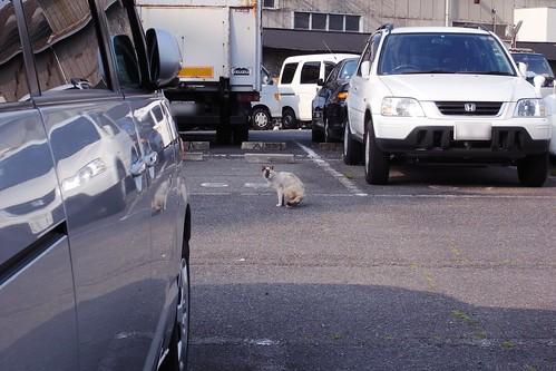 Today's Cat@20090527