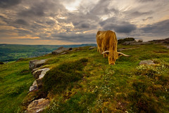 Curbar Cow (andy_AHG) Tags: sky clouds rural landscape outdoors evening countryside rocks stones derbyshire peakdistrict scenic hills moors nikond200 baslowedge