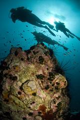 Lead Dives