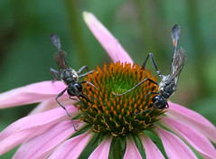 wasps on a flower