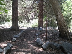 Trail from West Fork Camp.jpg (Mount Wilson, California, United States) Photo
