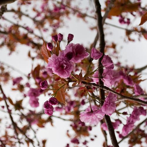 290410_ Blossom #4