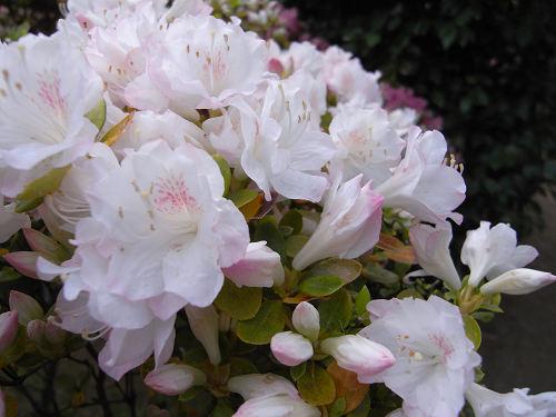 船宿寺(花)-11