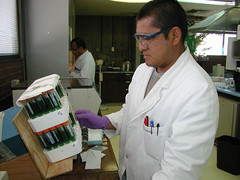 DNA extraction (CIMMYT) Tags: corn lab tissue headquarters staff laboratory sample dna technician maize sede laboratorio muestra biotechnology extraction adn empleado tejido agitation maz tcnico agitacin elbatn biotecnologa extraccin cimmyt