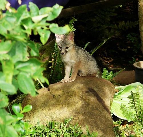 fox4 lila lippow, mtz