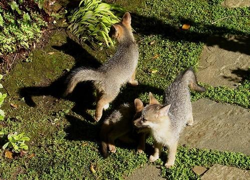 fox3 lila lippow, mtz