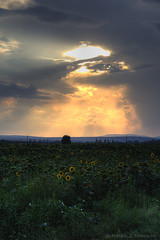 The heavens over Aytos (manozi) Tags: sunset sky sun mountain nature field grass clouds dark dusk hills bulgaria sunflowers sunflower hdr     aytos