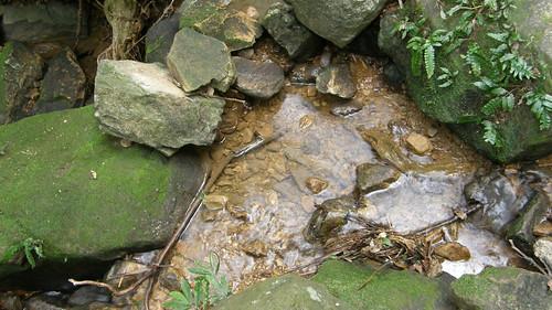 101.一池清潦quot; /></a></p> <p>102.沿著石梯坑溪向下游前進<br /> <a href=
