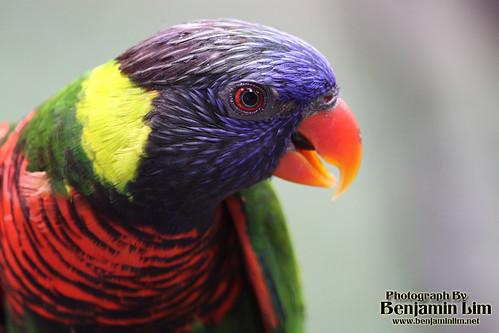 birdpark1_02