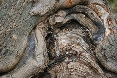 Untitled (Maragliano) Tags: trees macro nature textures