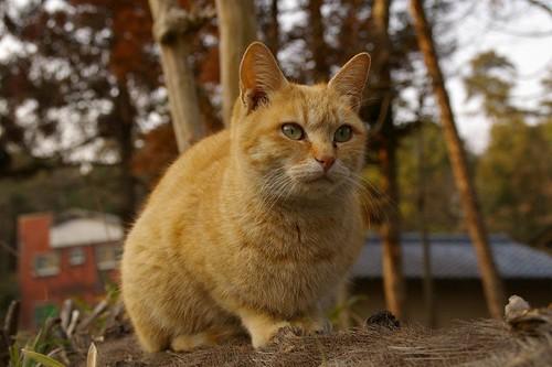 Stray Cat #43