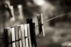 mandallk (catastroerg) Tags: wood nikon d70s clip plastic 1870mm clothespin mandal alignements laundryclip hangingclips