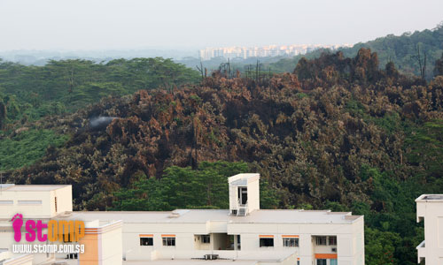 S'poreans should know that Bukit Batok forest fires not easy to put out