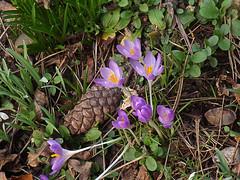 London spring flowers_0021