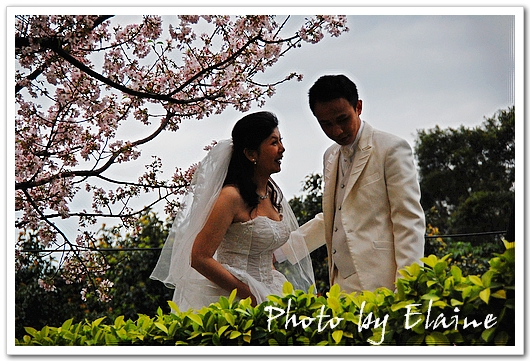 櫻花樹下的新娘2