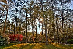 Carolina Spring (T i s d a l e) Tags: yard creek morninglight compound spring azaleas farm lawn northcarolina pines april dogwoods tisdale camellias goldstaraward carolinaspring