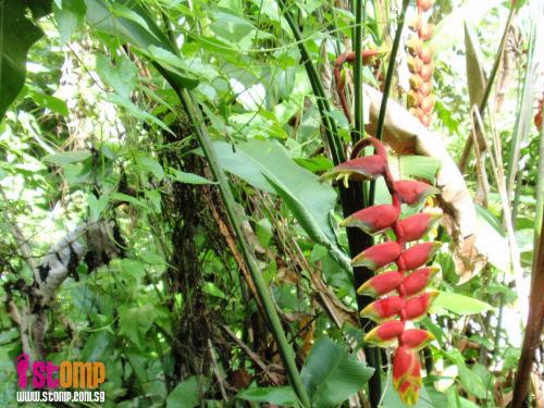 Celebrate nature, the Senapang Trail way