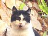 cicciobello (marisacitrano) Tags: palermo gatti cicciobello