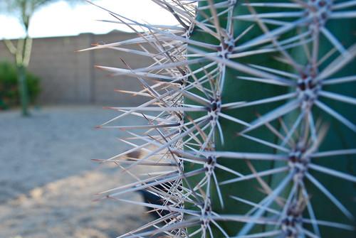 Arizona Plant Life