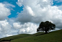 Hill, Tree, Sky and Clouds