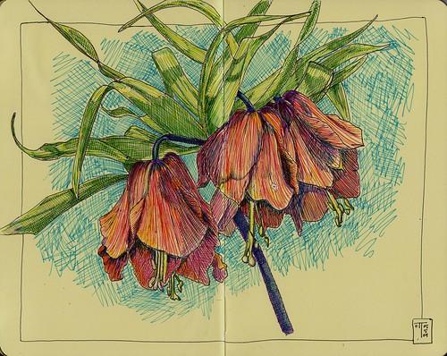 Mt Vernon Flower