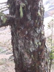 100_1411 (esmeraldaclack) Tags: japan trunk mossy