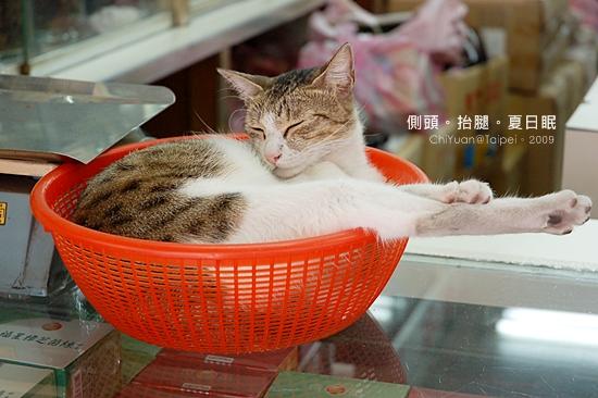Cat。大紅籃子。踢腿貓03